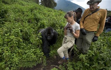 Rwanda: Turistii admira gorilele al caror numar este in crestere 1