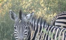 Parcul National Marakele din Africa de Sud 1