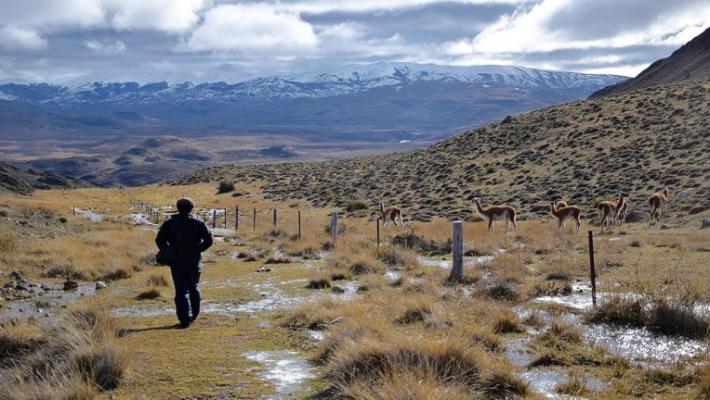 Jocul secret: Urmarirea unor lei de munte in Patagonia 9