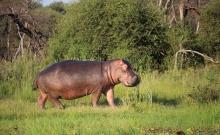 Parcul National Marakele din Africa de Sud 2