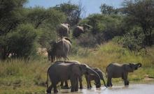 Parcul National Marakele din Africa de Sud 4