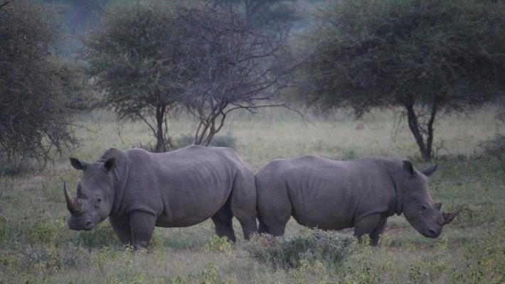 Parcul National Marakele din Africa de Sud 7