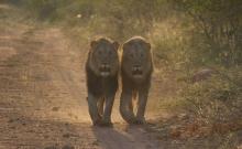 Parcul National Marakele din Africa de Sud 8