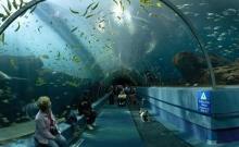 Ghid turistic Dubai 1