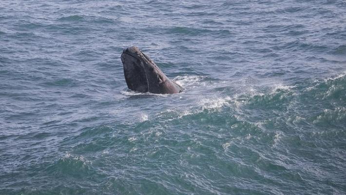 Pe urma balenelor in sudul Africii 9
