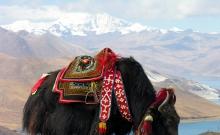Regiunea Tibet a castigat aproximativ 3 miliarde de dolari din turism anul acesta 1