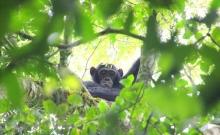Sanctuarul Tanzaniei pentru animale pe cale de disparitie 2