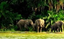 Sanctuarul Tanzaniei pentru animale pe cale de disparitie 4