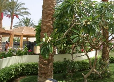 EGIPT, Hurghada 2020 - 2021