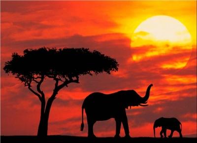 Circuit Kenya Safari si Plaja la Oceanul Indian