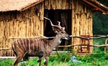 Masai Mara Lodge 1
