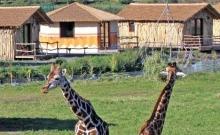 Masai Mara Lodge 5