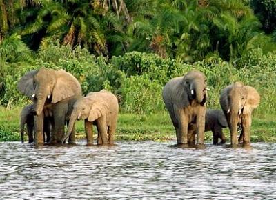 Sanctuarul Tanzaniei pentru animale pe cale de disparitie