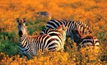 Sanctuarul Tanzaniei pentru animale pe cale de disparitie 5
