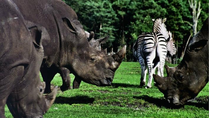 Serengeti Park Germania 4