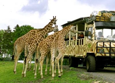 Informatii Serengeti Park Germania