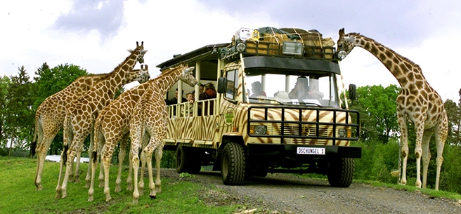 Serengeti Germania 1