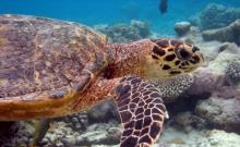 Atractii turistice Maldive 3