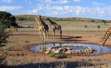 WTTC felicita Africa de Sud pentru schimbari ce privesc viza turistica 2
