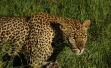 Sanctuarul Tanzaniei pentru animale pe cale de disparitie 7